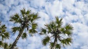 A palmeira deixa mover-se no ar, filme do lapso de tempo filme