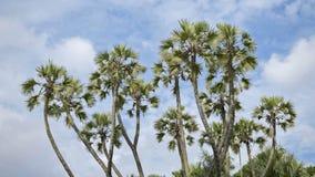 A palmeira deixa mover-se no ar, filme do lapso de tempo vídeos de arquivo