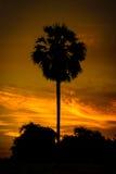 Palmeira do açúcar da silhueta Fotografia de Stock