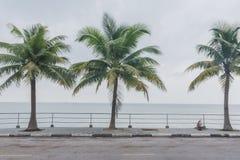 Palmeira do coco Imagens de Stock
