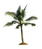 Palmeira do coco Imagem de Stock Royalty Free