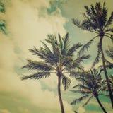 Palmeira do coco Fotos de Stock Royalty Free