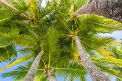 Palmeira do coco com céu azul, fundo tropical bonito imagens de stock royalty free