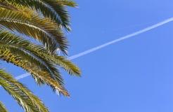 Palmeira do coco com a trilha do plano do ond do céu azul fotografia de stock