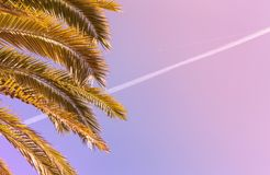 Palmeira do coco com a trilha do plano do ond do céu azul fotos de stock