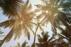 Palmeira do coco na praia Fotos de Stock Royalty Free