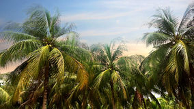 Palmeira do coco no fundo do céu no tempo crepuscular foto de stock