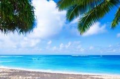 Palmeira do coco no Sandy Beach em Havaí, Kauai Fotos de Stock Royalty Free