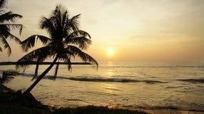 A palmeira do contorno no por do sol no oceano. fotografia de stock