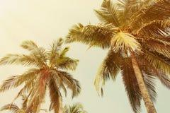 Palmeira do estilo do vintage Imagens de Stock