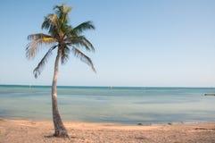 Palmeira do paraíso Foto de Stock Royalty Free