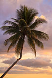 Palmeira do por do sol Fotos de Stock