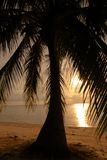 Palmeira do por do sol em Tailândia Koh Phangan imagem de stock