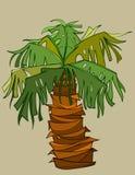 Palmeira dos desenhos animados com um tambor curto grosso Imagem de Stock