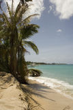 Palmeira e barco 1 Imagens de Stock