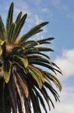 Palmeira e céu imagem de stock royalty free