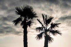 Palmeira e céu imagem de stock