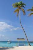 Palmeira e cabana Imagem de Stock Royalty Free