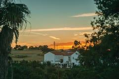 Palmeira e casa de campo no por do sol em uma fazenda fotografia de stock