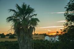 Palmeira e casa de campo no por do sol em uma fazenda fotografia de stock royalty free