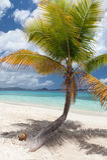 Palmeira e coco Fotos de Stock