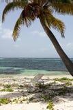 Palmeira e deckchair Imagem de Stock