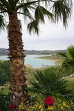 Palmeira e lago Fotografia de Stock
