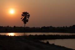 Palmeira e lagoa do açúcar da silhueta com por do sol Foto de Stock Royalty Free