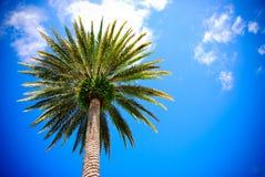Palmeira e o céu Fotografia de Stock Royalty Free