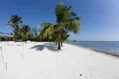 Palmeira e o oceano Fotografia de Stock