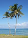 Palmeira e praia Fotografia de Stock Royalty Free
