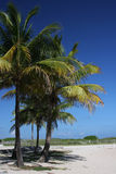Palmeira em Miami Beach Foto de Stock Royalty Free