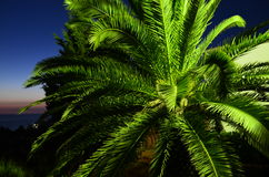 Palmeira em Montenegro fotos de stock