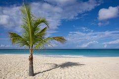 Palmeira em Sunny Caribbean Beach #2 imagem de stock