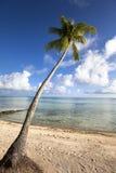 Palmeira em um Sandy Beach no mar ciano foto de stock royalty free