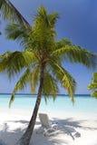 Palmeira em um Sandy Beach no mar ciano maldives fotografia de stock