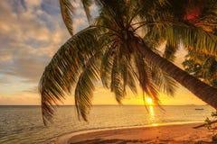 Palmeira em uma praia no por do sol em Seychelles imagem de stock