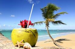 Palmeira em uma praia tropical Fotos de Stock