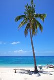 Palmeira em uma praia tropical da areia branca na ilha de Malapascua, Filipinas Fotos de Stock Royalty Free