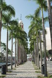 Palmeira em Victoria Harbor Imagem de Stock