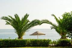 Palmeira, guarda-chuva e o mar Foto de Stock