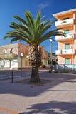 Palmeira luxúria em um dia ensolarado no porto de Bosa, Sardinia, Italia Imagens de Stock