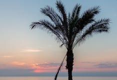 Palmeira mostrada em silhueta contra o céu Fotografia de Stock