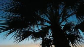 Palmeira na cena do por do sol Folhas da silhueta da palmeira no fundo do céu filme