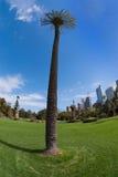 Palmeira na cidade fotos de stock royalty free