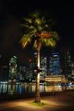 Palmeira na cidade Fotos de Stock