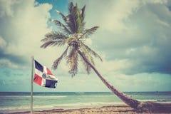 Palmeira na costa das caraíbas Imagens de Stock