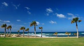 Palmeira na costa de Paphos Foto de Stock