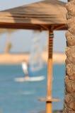 Palmeira na estância balnear Foto de Stock