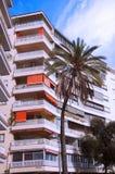 Palmeira na frente da construção alta ilustração do vetor